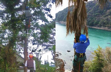 支障木の伐採・除去